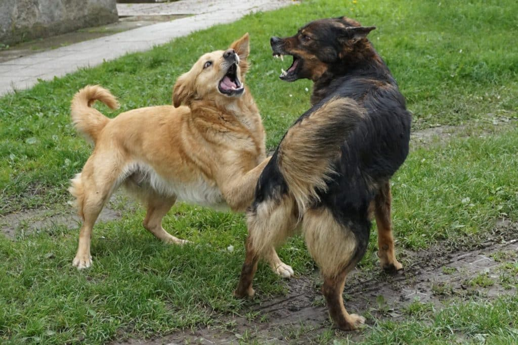 Dog Aggression Training Phoenix