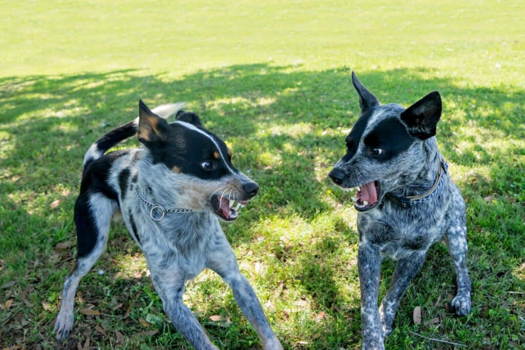 dog aggression training phoenix dominance aggression