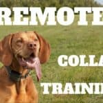 Remote Collar Training