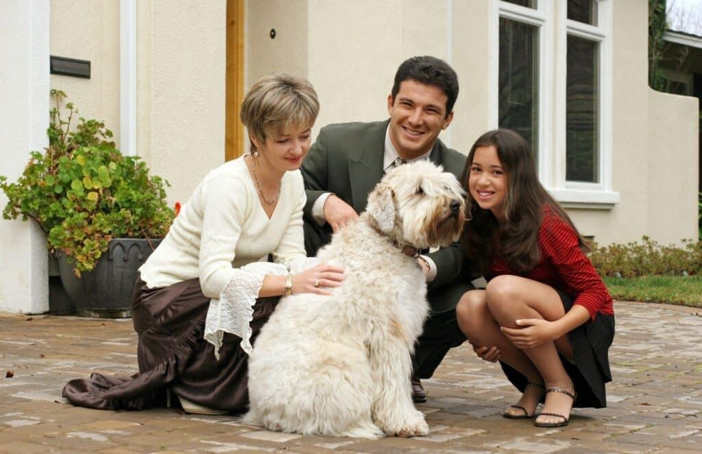 Dog Training Scottsdale