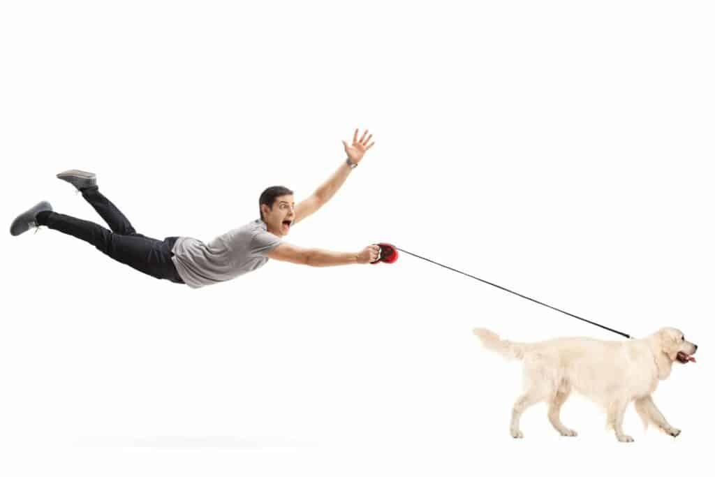 DOG TRAINING PHOENIX