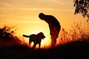 Maricopa Az Dog Training