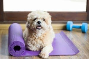 Maricopa Az Dog Trainer