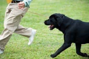 Dog Training Classes Maricopa Az