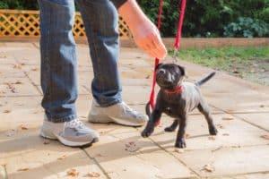 Dog Training Maricopa Az