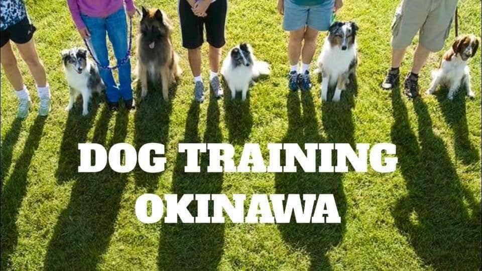 DOG TRAINING OKINAWA