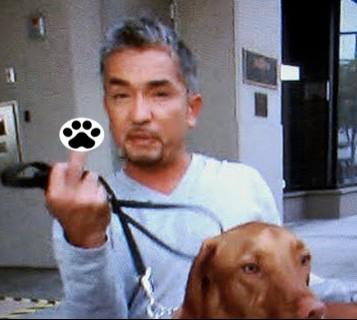 The Dog Dominance Myth.  Are Dog Trainers Like Cesar Millan, The Dog Whisperer Correct?