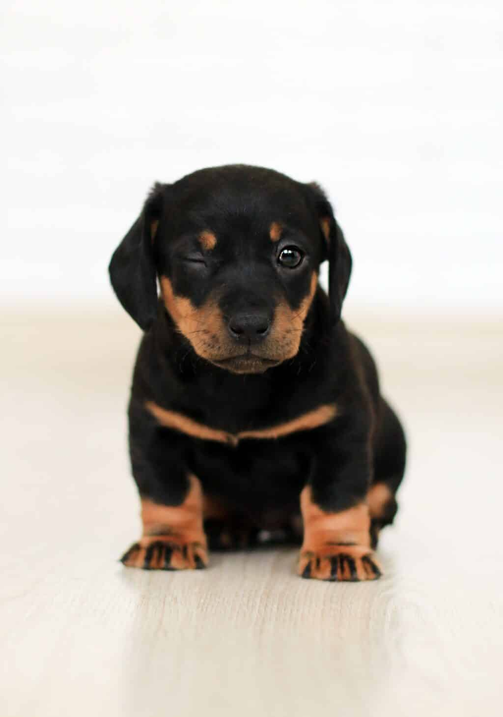 PUPPY TRAINING: WHEN TO START?