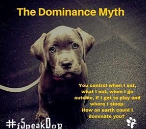 Dog-Dominance-Myth