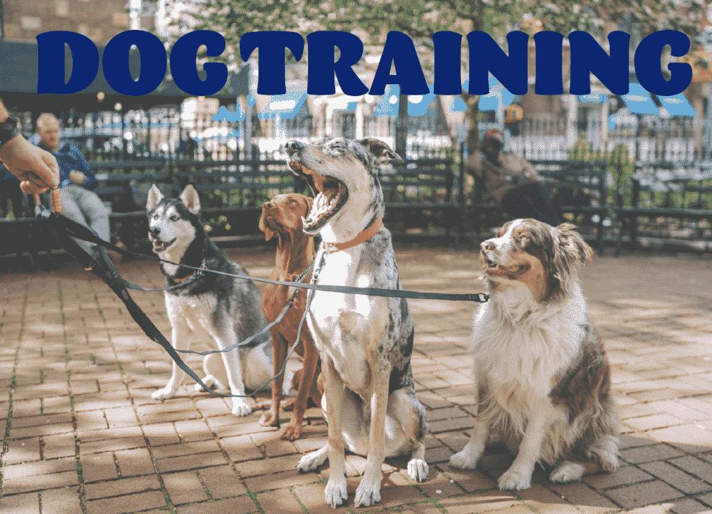 scottsdale/scottsdale-az-dog-training