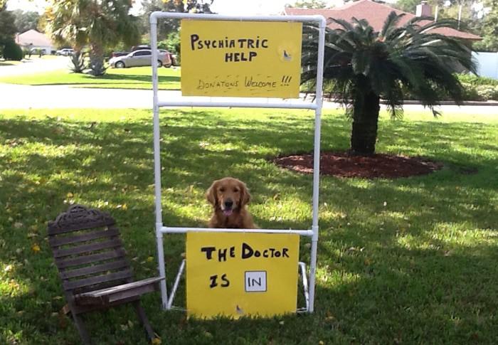 scottsdale:scottsdale-az-dog-training-behaviorist