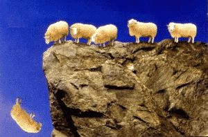 sheep followers