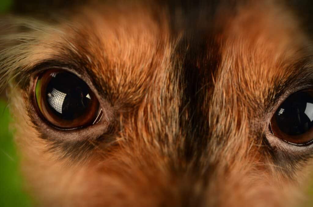 Dog Behaviorist Tempe