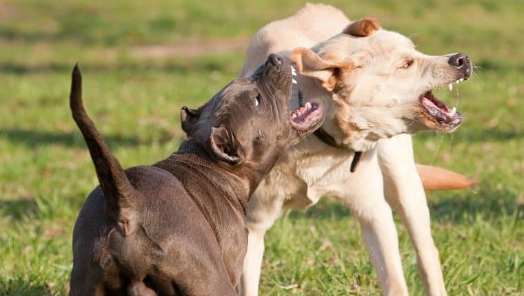 Dog Aggression Training Tempe