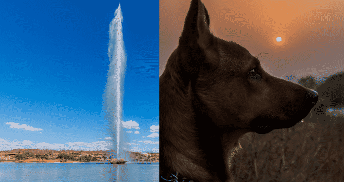Dog Training Fountain Hills