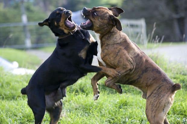 Dog Training Paradise Valley Dog Aggression Training