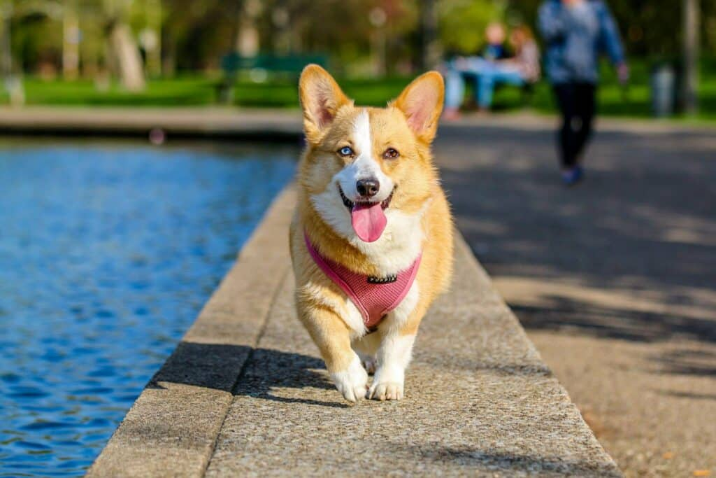 Dog Training Tempe Az