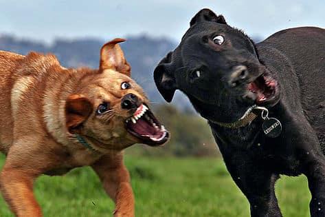 Aggressive Dog Training Phoenix