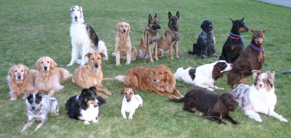 group_dog_training