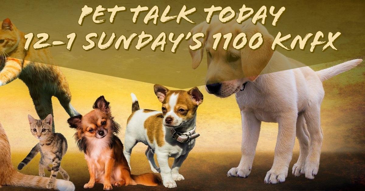 Pet Talk Today