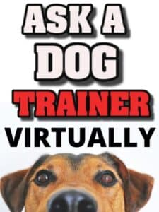 Online Dog Training Course