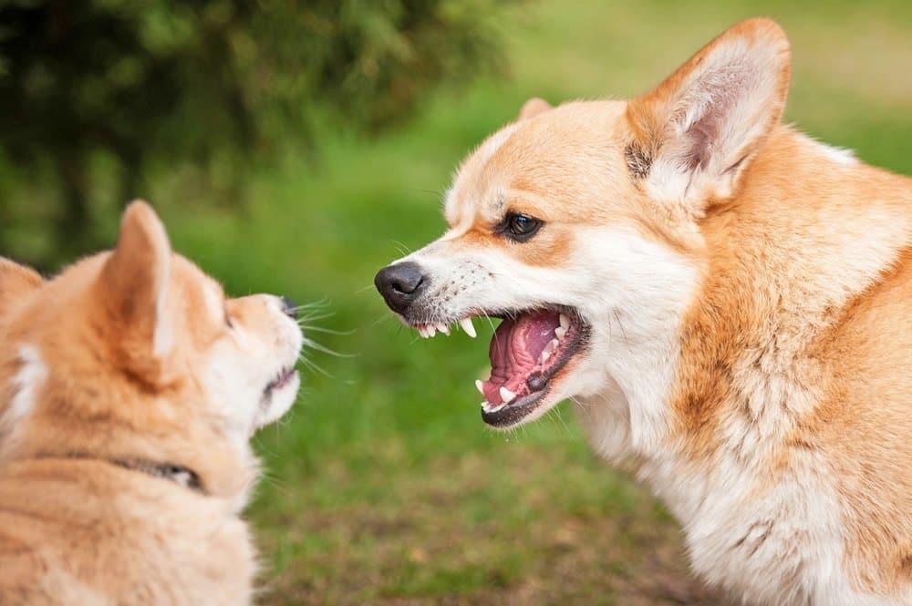INTRA-DOG-AGGRESSION