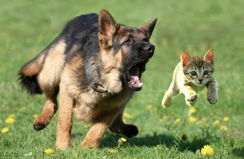 How to stop a dog from chasing a cat
