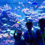 S.E.A AQUARIUM: The First Glowing Ocean in South East Asia