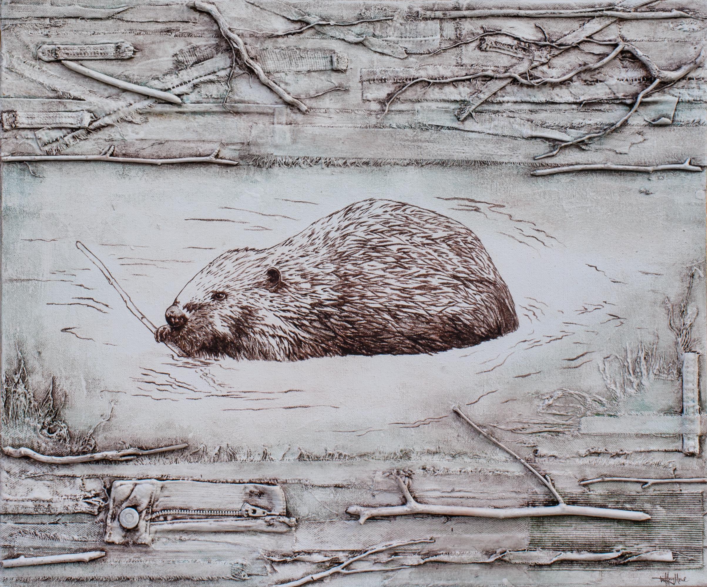 Beaver - Castor canadensis