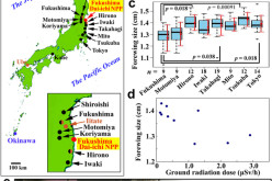 TIME Brags About Spinning Bufferfly Mutations From Fukushima Radiation