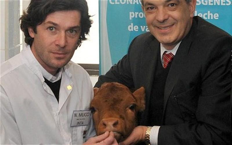 GMO Cows To Produce Human-Like Milk