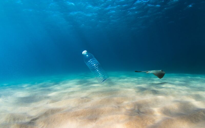Oceans Without Fish? The Race for Profits is Killing Our Oceans