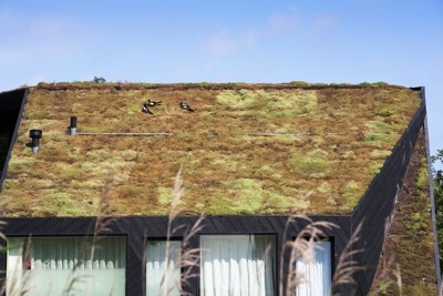 Green roofs can help slow climate change