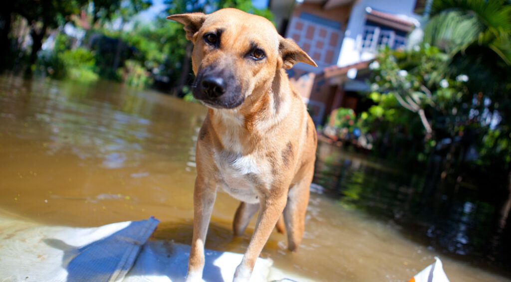 Northshore Humane Leading Disaster Relief