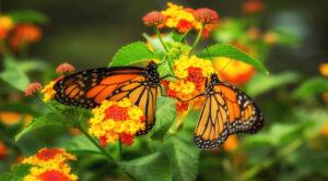 Prepare Summer Gardens for Fall
