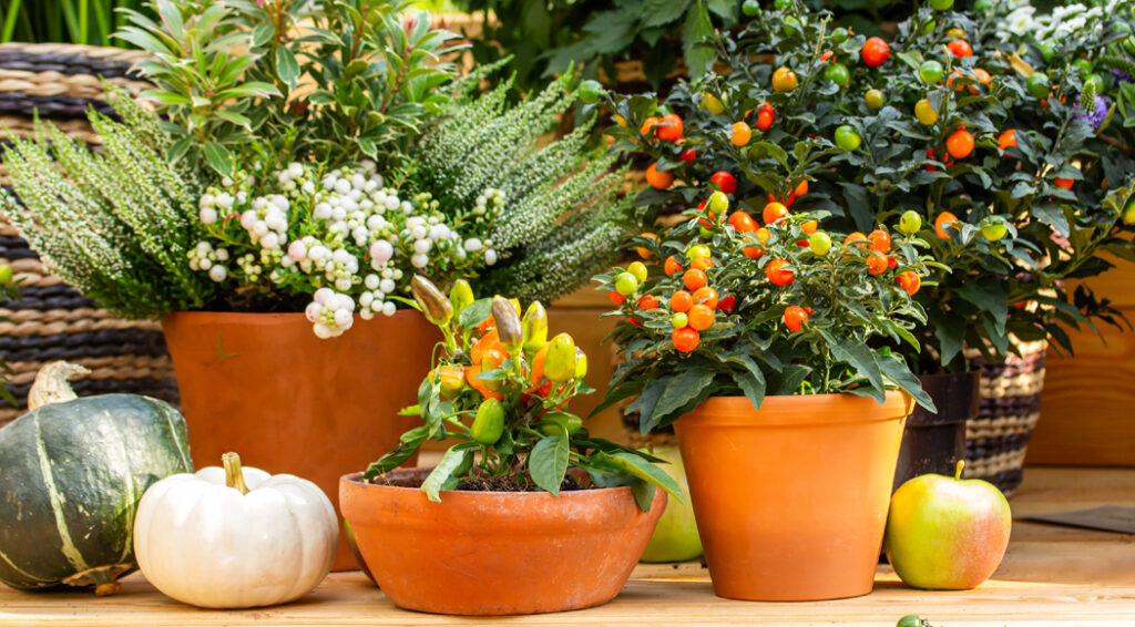 Container Gardening for fall