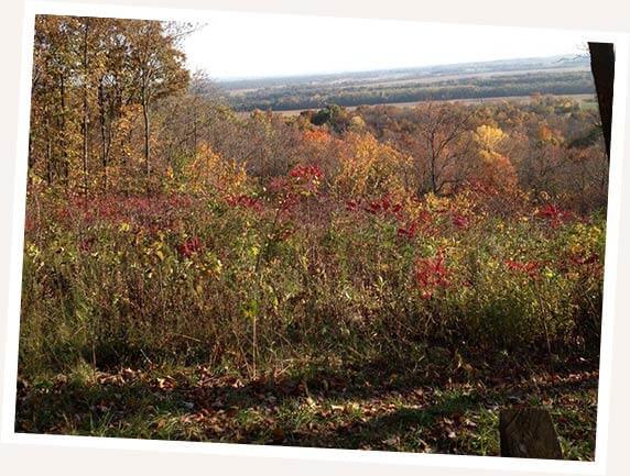 Foliage around MCT Trail image
