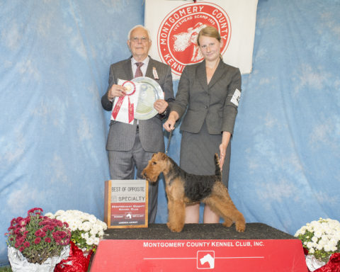 Best Of Opposite :  CH Welshmoor's Sweet Sadie At Teritails.  Owners:  Terry Lohmuller & Geraldine Jaitin.  Breeders:  Keith Bailey & Sharon Abmeyer & Geraldine Jaitin & Mathew Jaitin