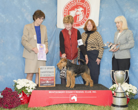 "Best of Opposite in Sweepstakes:  Seaplume's Cooper At Tailwinds.  Owners:  Linda Murray & Caryn Stevens.  Breeders:  Matt O""Farrell & Caryn Stevens"