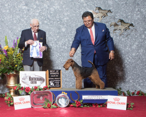 Winners Dog/Best of Winners Bruhil's Rangel's Gwalter Owner: Barry Fein Breeders: Gabriel & Ivonne Rangel