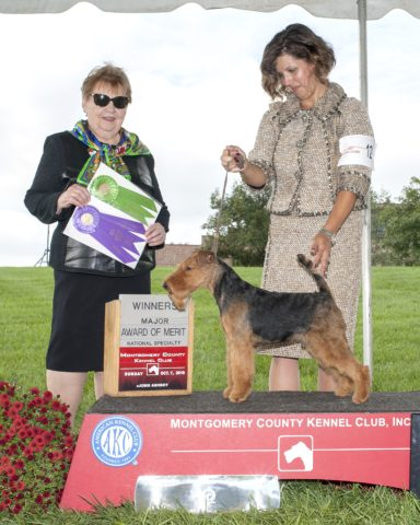 Winners Dog/Award of Merit: Abbeyrose Keeper Of The Code.  Owners: Judith Anspach, Mary Duafala & Pamela Allen.  Breeders: Judith Anspach, Mary Duafala & Pamela Allen.