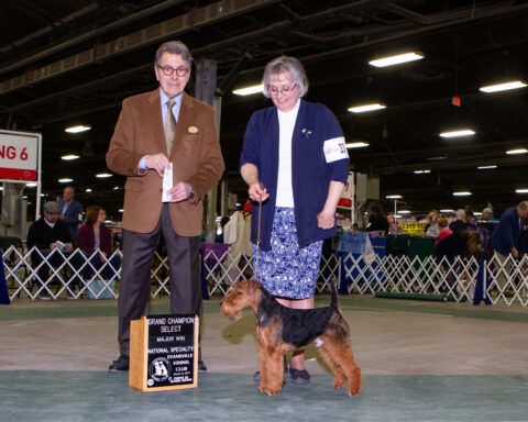 Select Dog: CH Brynmawr Dream Big.  Owners: Kathy Rost and Jean Callens.  Breeders: Kathy Rost and Jean Callens