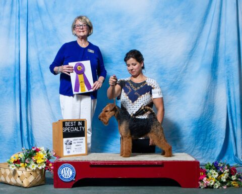 Best of Breed, Best in Specialty Show - GCHB HiWater Steuer's Eye of the Storm - Tammy