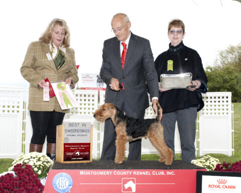 Best in Sweepstakes:  Brynmawr Mister Adsit.  Owners: Mark Adsit & Kathleen Rost & Jean Callens