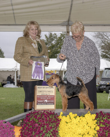 Best of Opposite in Sweepstakes:  Teritails & Shiloh Mornings Galway Girl.  Owners:  Terry Lohmuller & Cathy Francis.  Breeders: Terry Lohmuller & Cathy Francis