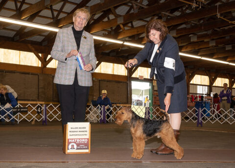 Reserve Winners Dog: Darwyn's Trail Blazer.   Owner: Larisa Hotchin