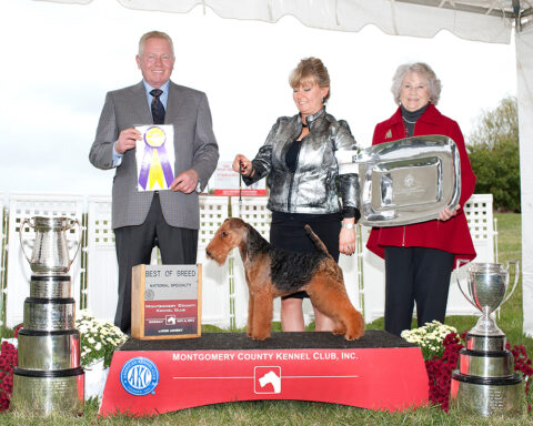 Best of Breed: GCH Brightluck Money Talks.  Owners: Keith Bailey & Janet McBrien.  Breeder: Janet McBrien