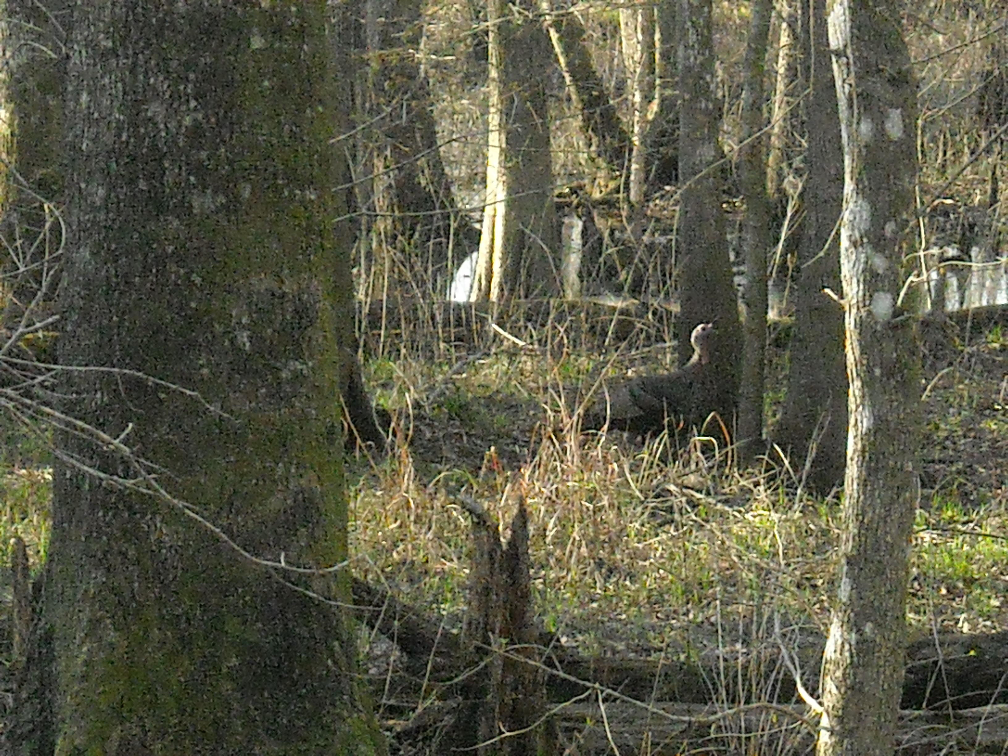 Hunt Pic