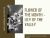 Copy of flower of the month