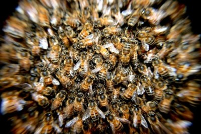 bees-276190_640